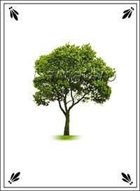 Екатерининское гадание Дерево