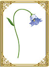 Цветочный оракул