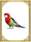 Оракул птиц