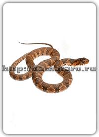 Изображение карты Змея.