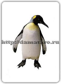 Изображение карты Пингвин.